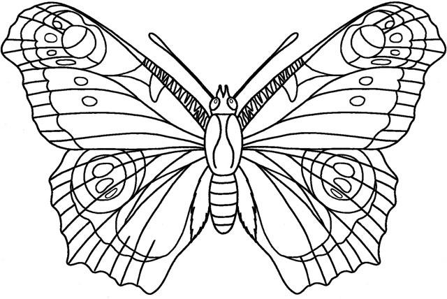 butterfly-sketch